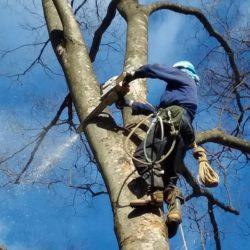射庭林業 有限会社4