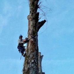 射庭林業 有限会社1