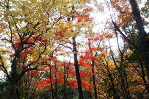 takashima_konara_kaede