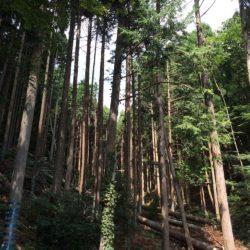 光洋木材画像1
